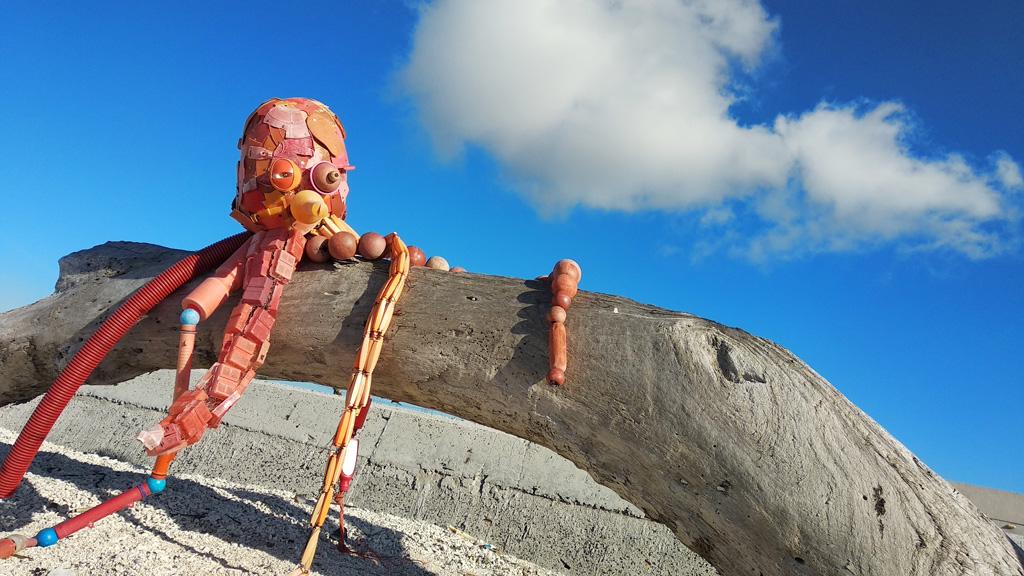 澎湖特有種章魚,是澎湖代表性的物種,尚未命名卻已面臨滅絕危機。